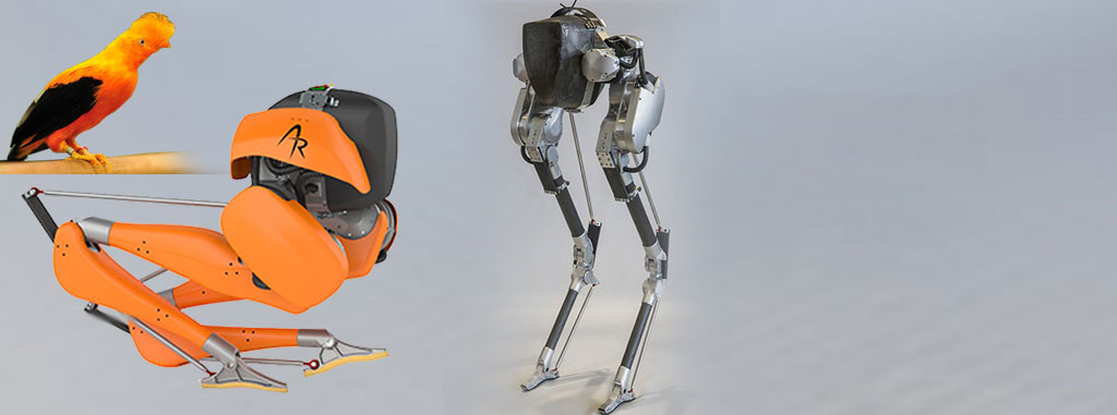 Bird-Inspired Robots